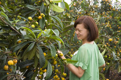 Loquat Tree and Girl royalty free stock photos