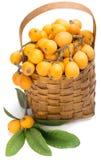 Loquaten bär frukt på filial och i korg Arkivbilder