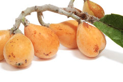 Loquats Stock Photography