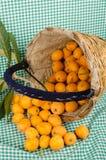 Loquats in harvesting basket still life Royalty Free Stock Photo