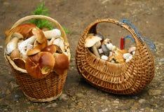 Loquet de champignon de couche images stock