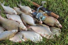 Loquet de pêche - brème photos libres de droits