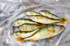 Loquet de poissons image libre de droits