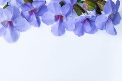 Lorbeer clockvine Blume stockbilder