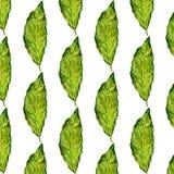 Lorbeerblatt-Aquarellillustration auf weißem Hintergrund, nahtloses Muster basiert auf Lorbeerblatt, Aquarellfarbe, für das Gesch Stockfoto