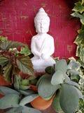 Lord Buddha och växter på krukor Royaltyfri Bild