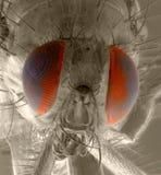 Lord der Fliegen stockfotografie