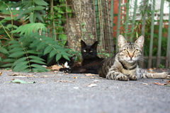 Lord of the streets. Two cats laying outside in a yard, one being lazy, another observing attentively Stock Photo