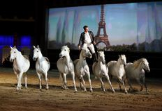 Lorenzo se tenant sur de beaux chevaux Images libres de droits