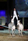 Lorenzo se tenant sur des chevaux Images libres de droits