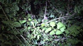 Lori lent sur l'arbre la nuit banque de vidéos