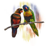 Lorikeet Parrots watercolor Stock Photo
