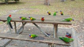 Lorikeets et perroquets, Nouvelle-Galles du Sud, Australie photos stock