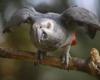 Loro agitated - parque zoológico fotos de archivo libres de regalías