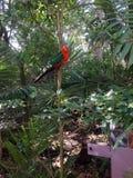 Loro coloreado en el parque zoológico de Taronga Fotografía de archivo