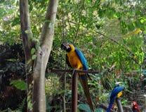 Loro colorido en bosque fotos de archivo
