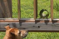 Loro cuáquero y perro Imagen de archivo