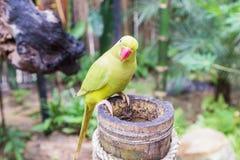Loro de color verde amarillo en parque del pájaro Fotografía de archivo libre de regalías
