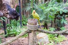Loro de color verde amarillo en parque del pájaro Fotos de archivo