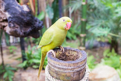 Loro de color verde amarillo en parque del pájaro Imágenes de archivo libres de regalías