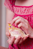 Loro del bebé en manos Foto de archivo libre de regalías