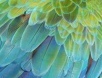 Loro del Macaw Fotografía de archivo