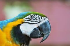 loro del macaw en selva tropical Foto de archivo libre de regalías