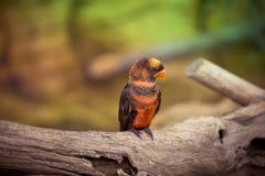 Loro en parque del safari de Woburn Imagen de archivo libre de regalías
