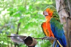 Loro, pájaro Imágenes de archivo libres de regalías