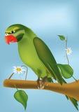 Loro verde Fotos de archivo libres de regalías