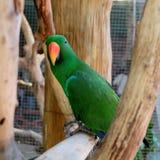 Loro verde en rama de árbol Fotos de archivo libres de regalías