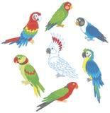 Loros coloridos divertidos Fotografía de archivo libre de regalías