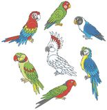 Loros coloridos divertidos Fotos de archivo libres de regalías