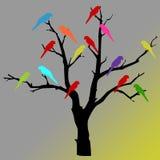 Loros coloridos en árbol Imagenes de archivo