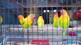 Loros de las cotorras rizadas en célula Pájaros coloridos en el mercado del animal doméstico almacen de metraje de vídeo