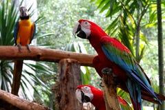 Loros en un parque de los pájaros Fotos de archivo