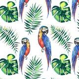 Loros grandes amarillos de la selva hermosa linda colorida brillante y azules tropicales Imagen de archivo libre de regalías