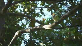 Loros salvajes que se sientan en ramas de árbol Loros de la cámara lenta que comen entre árboles almacen de metraje de vídeo