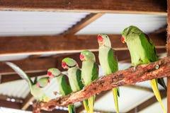 Loros verdes en árbol Foto de archivo