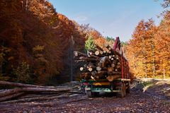 Lorry transporting wood cut. Big lorry transporting beech wood Royalty Free Stock Photos