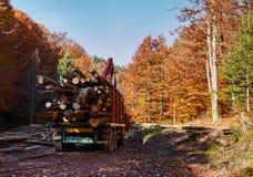 Lorry transporting wood cut. Big lorry transporting beech wood Stock Image