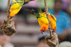 Lory Stock Photography