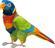 Lory Parrot Royalty Free Stock Image