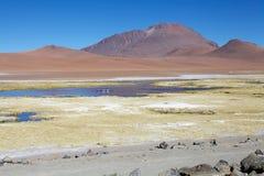 Los佛拉明柯舞曲国家储备,智利 库存照片