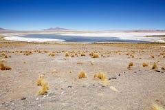Los佛拉明柯舞曲国家储备,智利 免版税图库摄影