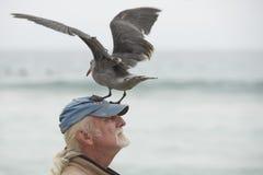 LOS ÁNGELES, los E.E.U.U. - 3 de agosto de 2014 - aterrizaje de la gaviota en una cabeza del hombre Imagenes de archivo