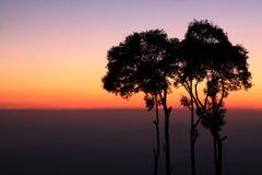 Los árboles Imágenes de archivo libres de regalías