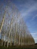 Los árboles Foto de archivo