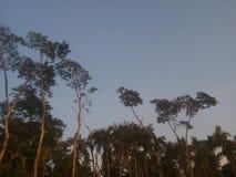 Los árboles Fotografía de archivo libre de regalías