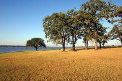 Los árboles acercan a un lago Foto de archivo